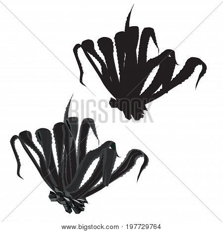 Agave American (Agave americana) a vector silhouette and the vector grayscale image on a white background