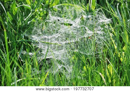 Spiderweb with drops of dew in the grass on a summer morning. Close up.