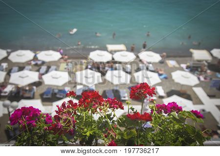 Flowers against the background of beach umbrellas the sea and sky. In the background beach umbrellas are not focused. Selected focus. Background in style Vacation and travel Horizontal