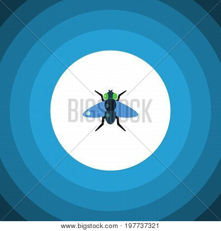 Dung Vector Element Can Be Used For Dung, Fly, Bluebottle Design Concept.  Isolated Bluebottle Flat Icon.