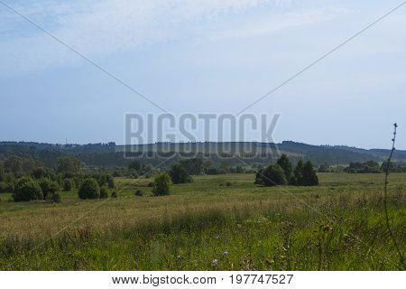 Russian hot summer vast field beautiful landscape shot with fine blue sky and clouds and several bushes on the foreground