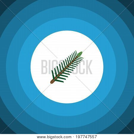 Spruce Leaves Vector Element Can Be Used For Rosemary, Spruce, Leaves Design Concept.  Isolated Rosemary Flat Icon.