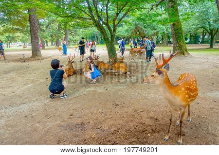Nara, Japan - July 26, 2017: Visitors taking picturtes with wild deer in Nara, Japan. Nara is a major tourism destination in Japan - former capita city and currently UNESCO World Heritage Site.