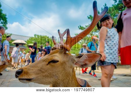 Nara, Japan - July 26, 2017: Portrait of a beautiful wild deer with a little girl behind in Nara, Japan. Nara is a major tourism destination in Japan - former capita city and currently UNESCO World Heritage Site.