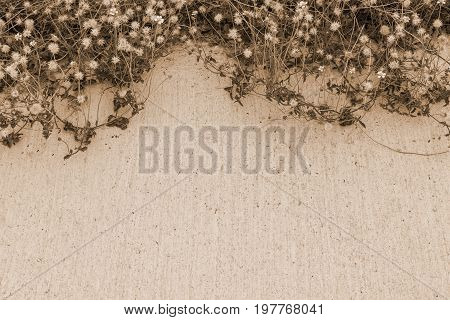 The dried flowers on the concrete floor