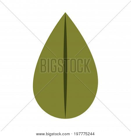 white background with colorful silhouette of ovoid leaf vector illustration