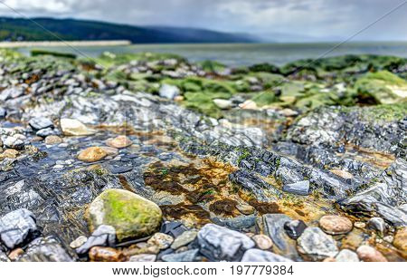 Macro Closeup Of Green, Mossy Rocks And Saint Lawrence River In Saint-irenee, Quebec, Canada In Char