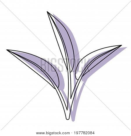 white background with watercolor silhouette of leaves lanceolate vector illustration