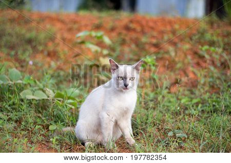 a small domesticated carnivorous mammal with soft fur, a short snout, and retractile claws. It is widely kept as a pet or for catching mice, and many breeds have been developed