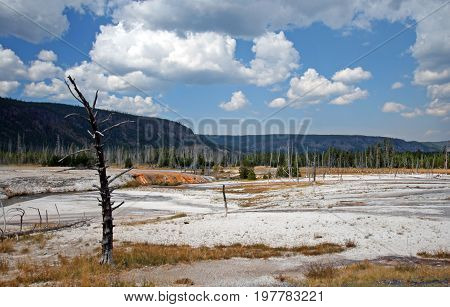 Dead Tree In Black Sand Geyser Basin In Yellowstone National Park In Wyoming Usa