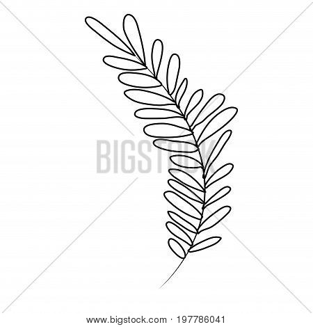 white background with monochrome silhouette of long branch with leaves oval vector illustration