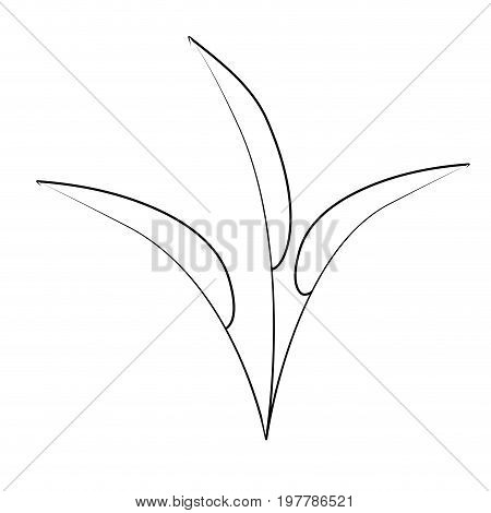 white background with monochrome silhouette of leaves lanceolate vector illustration