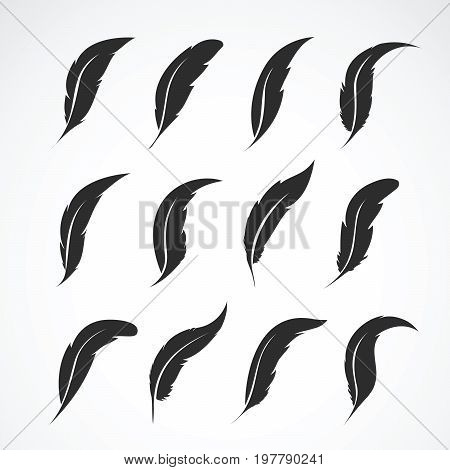 Vector group of feather on white background. Icon. Feathers symbol in vector format.