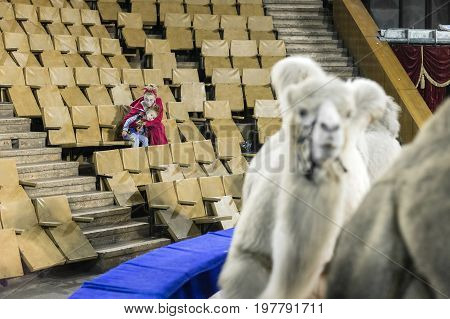 A woman with a child sit in the auditorium during the rehearsal and training of camels in the circus.