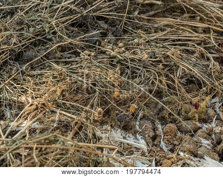 Garbage heap of dry grass, chicken feathers and rotten vegetables close-up. Rotting and decaying organic debris photographed with a soft focus.