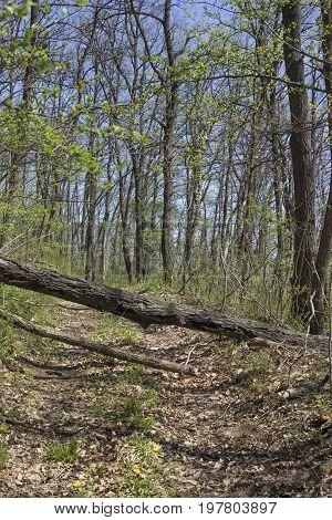 Fallen Tree Blocking The Dirt Road 2