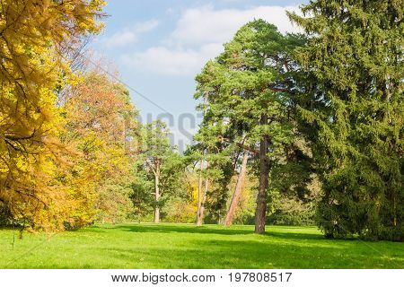 Large glade in the park covered grass among a conifers and deciduous trees in autumn day