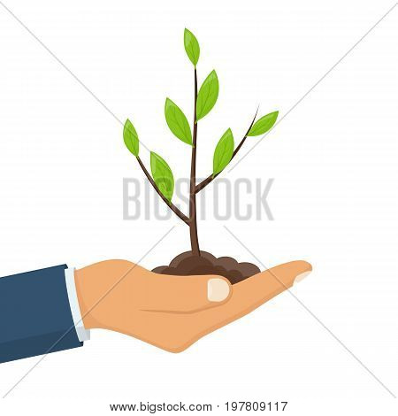 Human hand hold green small tree. Male farmer, gardener hold sprout. Care environmental development. Growing concept. Planting sapling. Vector illustration flat design. Isolated on white background.