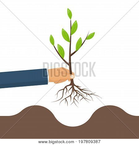 Tree in hand. Planting young green tree, sapling with roots in hand man. Gardening, agriculture, caring for environment. Vector illustration flat design. Isolated on white background.