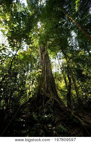 Tree Around Kuang Si Waterfall