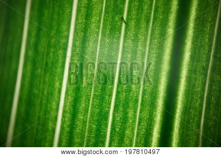 Green Flower Foliage, Macro Photoghaphy