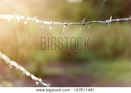 fence scope, The fence barbed wire sparkling beautiful sunshine.