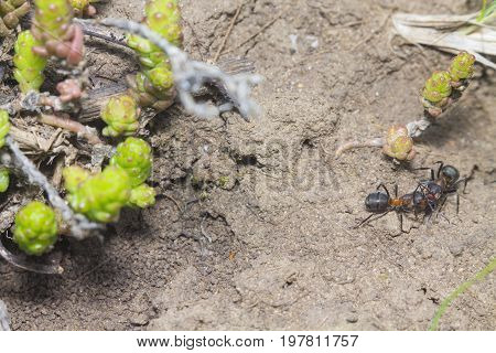 Two ants met and discussed the latest news