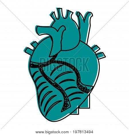 human heart icon image vector illustration design  blue color