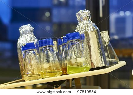 Lab rocker shaking flasks and bottles wrapped in aluminium foil
