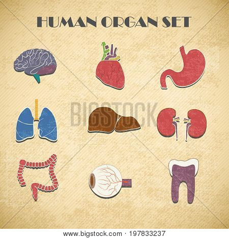 Internal organs decorative icons set isolated vector Illustration