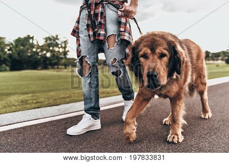 Exited about good walk. Close-up of man walking with his dog while spending time outdoors