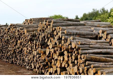 Wood stocks are stacked on the ground