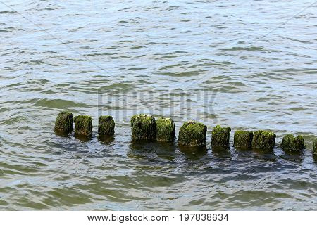 The wooden poles look like they are almost sunk in water. This breakwater it is on the Baltic Sea close to shore in Kolobrzeg in Poland