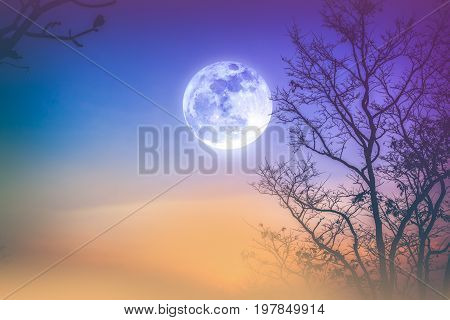Night landscape of colorful sky foggy is swinging between silhouette of dry tree and bright full moon. Serenity nature background. Outdoor at nighttime. Vintage tone. The moon taken with my own camera.
