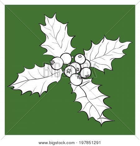 Mistletoe black and white branch with leaves and berries, holly berry Christmas decoration element, sketch vector illustration on green background.
