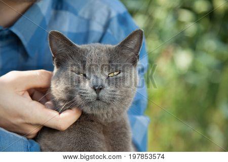 british kitten on arm of the boy outdoors.
