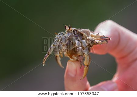 Holding A Hermit Crab