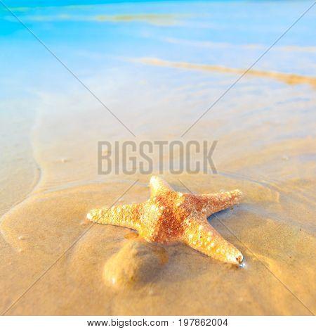 Fish Sea Star