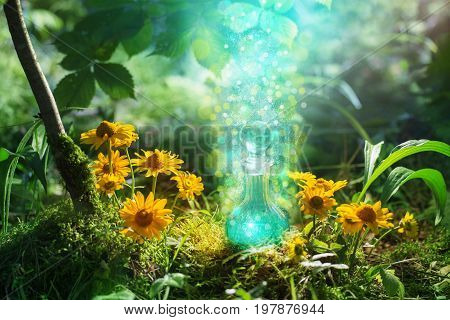 the magic potion in bottle in forest