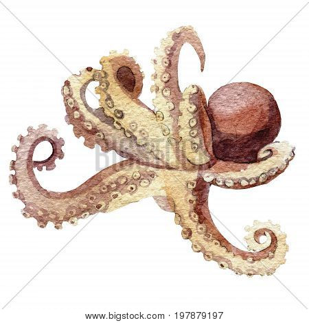 Octopus silhouette watercolor sketch. Wildlife art illustration