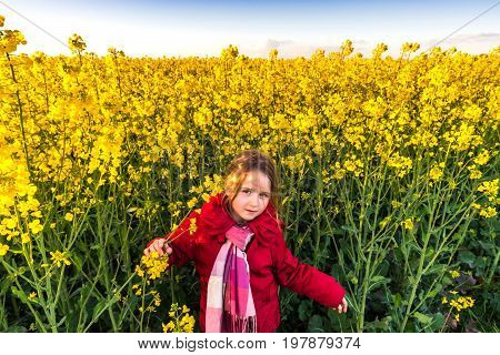 Cute little gpreschooler girl in yellow bittercress field sunset