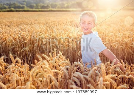 Boy running and smiling in a golden wheat field in summer sunset
