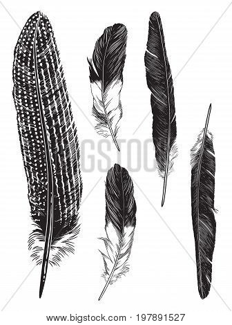 Pen and ink illustration of five feathers. Detailed vector drawing.