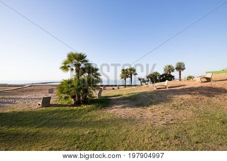 Cement Benches And Palms Looking At Sunrise On The Beach