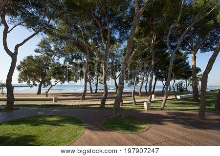 park with pine trees next to San Vicente or Sant Vicent Turret Beach also named Torreon in Benicassim Castellon Valencia Spain Europe. Green grass blue clear sky and Mediterranean Sea