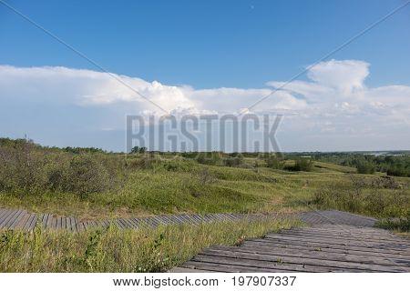 A boardwalk over grassy fields on a summer day