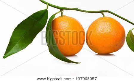 Leaves branch oranges low fat organic food color white