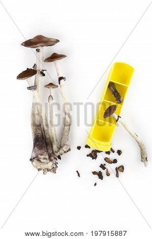 Magic mushroom microdosing fresh psychedelic mushrooms and dry hallucinogen mushrooms in gelcaps isolated on white background with pillbox top view. Alternative medicine.
