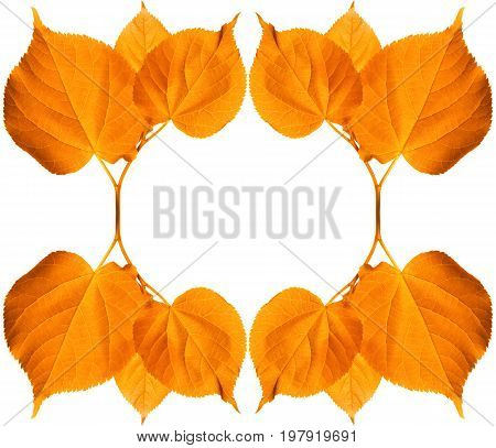 Frame Of Autumn Sunlight Leaves