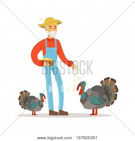 Old farmer man feeding turkeys, poultry breeding vector Illustration on a white background
